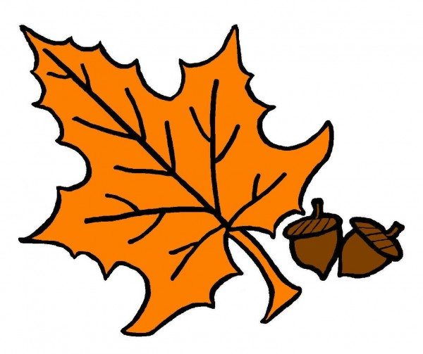 Autumn Maple Leaf Fall Tree Black Maple Transparent Background PNG Clipart