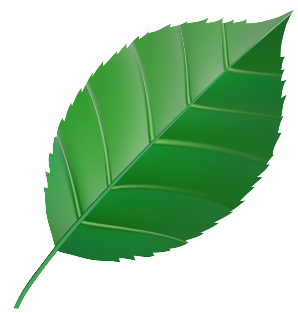 Computer Icons Plants Open Feather Transparent Background PNG Clipart