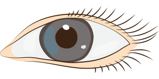 botany, eye, eyelash, graphics transparent background PNG clipart thumbnail