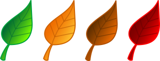autumn leaf color, open, autumn, leaf transparent background PNG clipart thumbnail