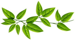 branch, computer icons, leaf, plant - leaf transparent background PNG clipart thumbnail