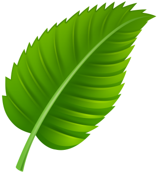computer icons, web design, design, plant - leaf transparent background PNG clipart thumbnail