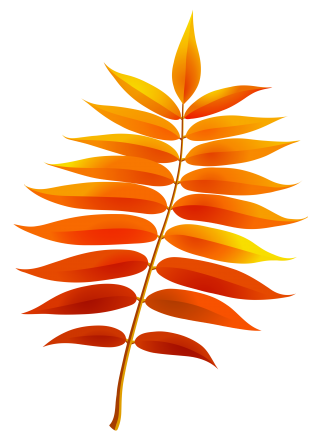 leaf, computer icons, autumn leaf color, heliconia transparent background PNG clipart thumbnail
