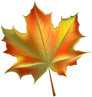 leaf, design, autumn leaf color, woody plant - leaf transparent background PNG clipart thumbnail