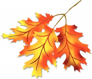 open, autumn, cartoon, tree transparent background PNG clipart thumbnail