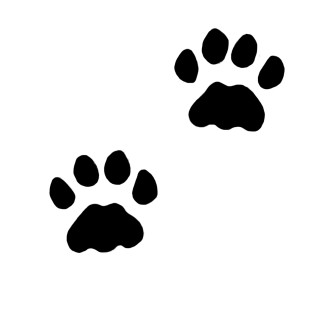 cat, printing, line art, footprint - paw print transparent background PNG clipart thumbnail
