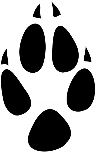 printing, art, red fox, black-and-white - paw print transparent background PNG clipart thumbnail
