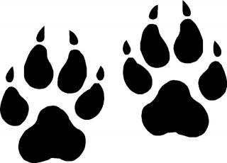 wall decal, animal track, foot, black-and-white - paw print transparent background PNG clipart thumbnail