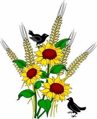 season, open, borders , sunflower transparent background PNG clipart thumbnail