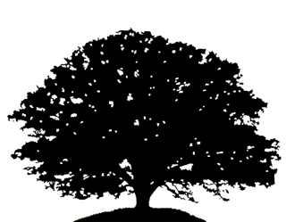 oak, english oak, open, oak - tree silhouette transparent background PNG clipart thumbnail