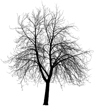 tree, design, art, plant stem - tree silhouette transparent background PNG clipart thumbnail